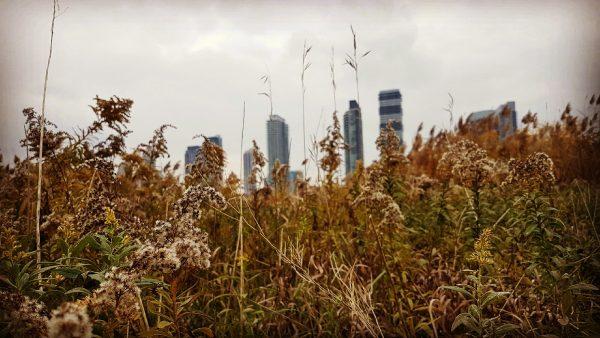 Toronto-Landscape